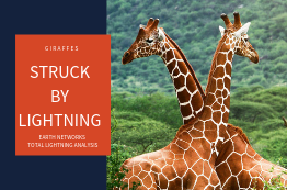 "Two giraffes with the title ""Giraffes Struck By Lightning: Earth Networks Total Lightning Analysis"""