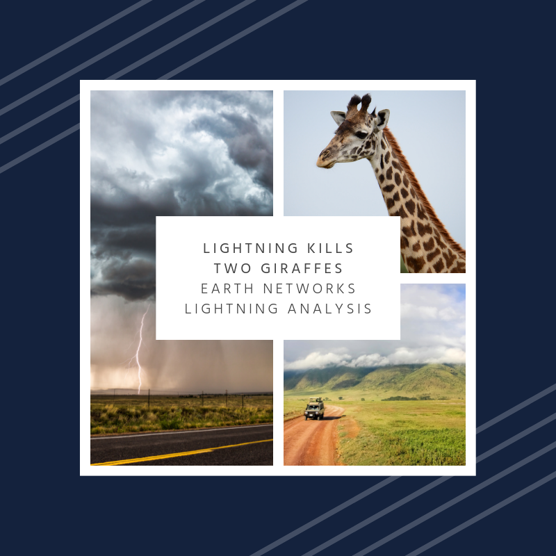 Lightning kills two giraffes | Earth Networks Lightning Analysis for lightning safety outdoors