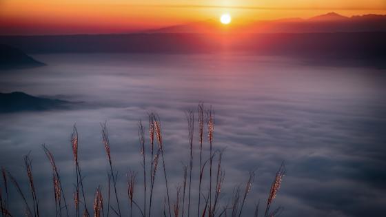 a sunrise over a foggy meadow