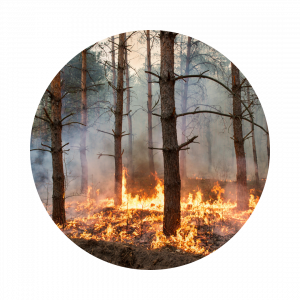 wildfire burning ground cover in a forest